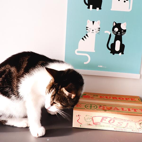 Poster Kittens blauw ANNIdesign 02